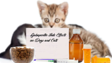 Gabapentin Side Effects on Dogs and Cats